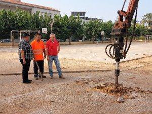 Soques arbres eliminats