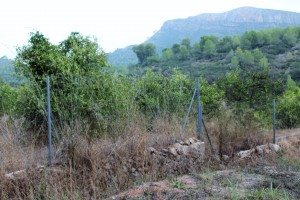 Murta camp abandonat 2