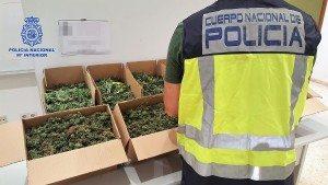Policia Nacional marihuana alzira