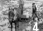 Alberic collita 52