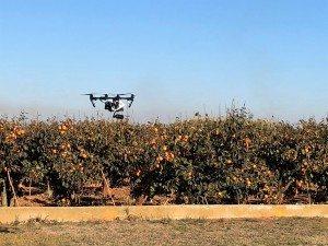 algemesi drons vigilen terme